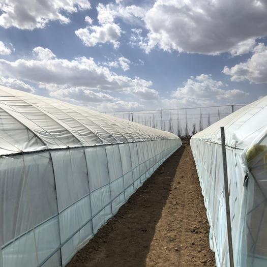 天津市静海区种植大棚 单体冷棚(种植 瓜果 草莓专用)