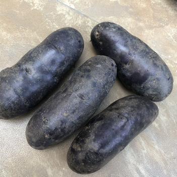 黑金剛土豆 貨源剩余不多,需要的客戶抓緊聯系我哦