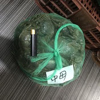 汈叉湖大閘蟹 優質中母新鮮貨凌晨出水批發價出可拼包湊件有時價格未更新請詢價