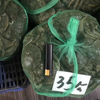 汈叉湖大闸蟹 优质35公硬规 青背白板 当日新鲜货低价现发 有时价格未更新