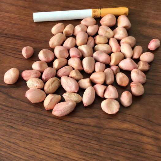 河南省鄭州市中牟縣白沙系列花生 6-7磨醬米新米上市,小顆粒