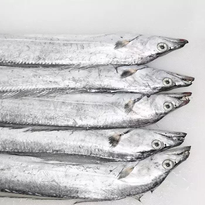 一箱7斤多禮盒裝,新鮮速凍,100%新鮮帶魚。純東海海域