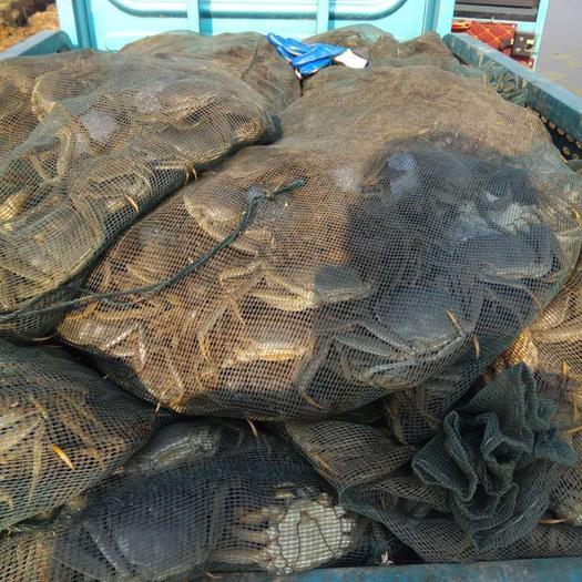 湖北省武汉市蔡甸区野生河蚌 都是自己养殖大杂蟹,质量有保障,价格优惠,欢迎咨询。