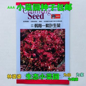 生菜籽 紫叶生菜种子包邮