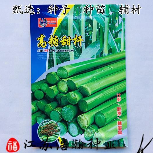 江蘇省宿遷市沭陽縣甜高粱種子 高糖甜桿種子包郵