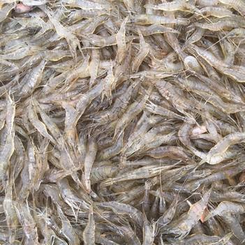 白米虾 各种规格有售