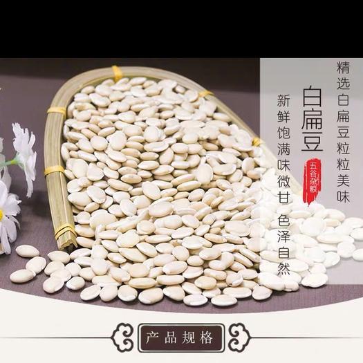 河北省保定市安国市 白扁豆 精品
