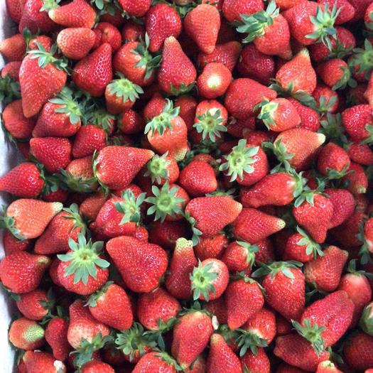 江苏省徐州市贾汪区宁玉草莓 主甜查理、宁玉、妙香、红颜,本产地占地4万亩可供老板前来参。