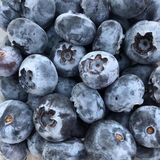 广东省广州市白云区 智利蓝莓