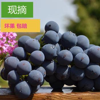 【特价包邮】现摘夏黑葡萄无籽黑蜜葡萄新鲜水果批发