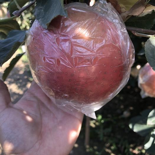 河北省石家莊市辛集市 河北斗南蘋果紅蘋果