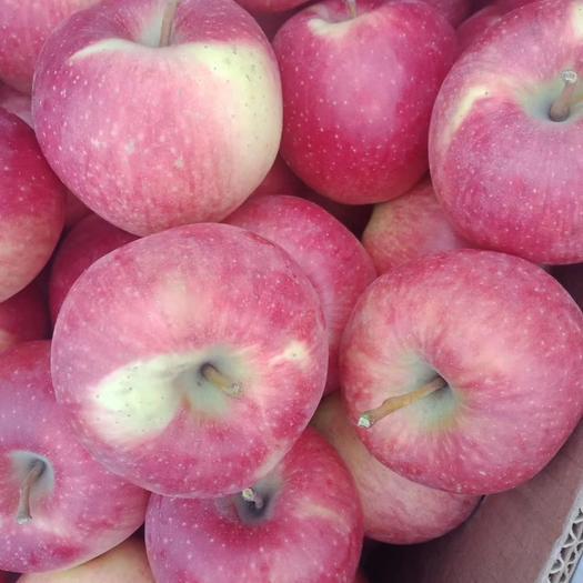 山西省晉中市祁縣 祁縣大山里的丹霞蘋果  當季水果。正大量采摘。口感脆甜 無添