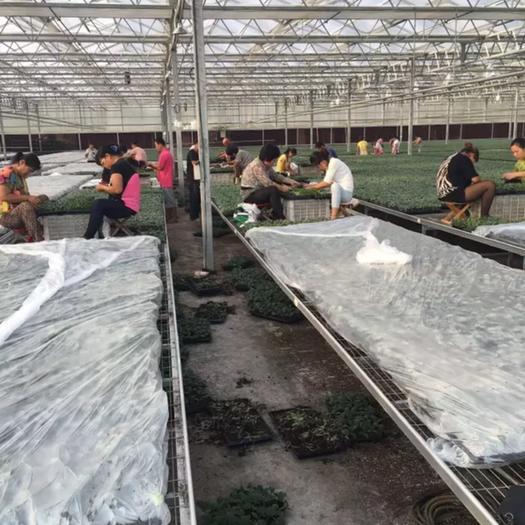 重慶市渝北區 專業包裝工 提供各類生鮮水果的采摘服務