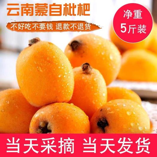 云南省昆明市东川区 米易枇杷产地直销含箱5斤新鲜现货非云南枇杷
