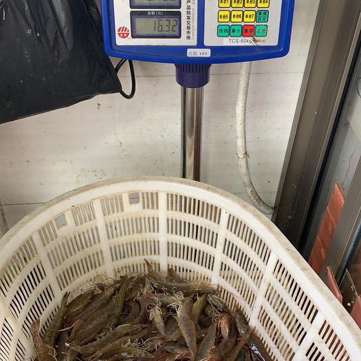 上海市宝山区近缘新对虾 人工养殖 3-5钱