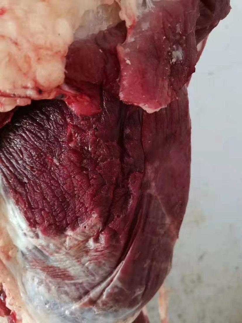 [牛肉类批发]牛肉类 每天新宰价格35元/斤