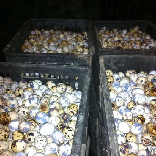 河南省新鄉市牧野區鵪鶉皮蛋 去皮鵪鶉蛋