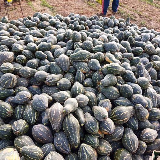 廣東省江門市開平市香芋南瓜 2~4斤