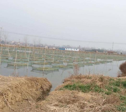 湖北省仙桃市仙桃市 大型养殖基地黄鳝直供