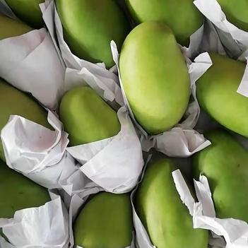 玉芒產地直供質量保證柬埔寨芒果一手貨源 不包郵
