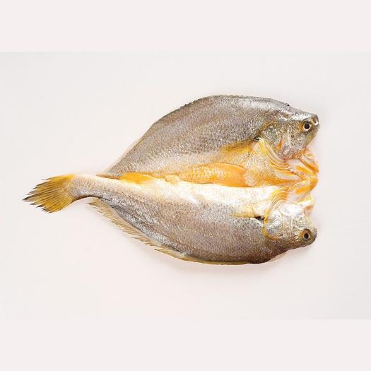 福建省寧德市蕉城區 黃魚鲞寧德原產地大黃花魚黃魚鲞(餐廳燒烤清蒸,尋全國合作)