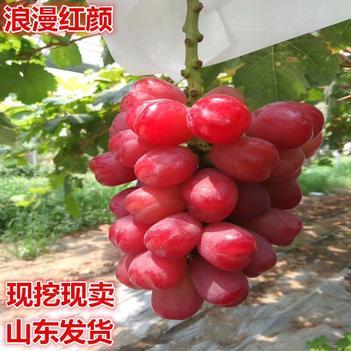 浪漫红颜葡萄苗 包品种,包成活,拥有多年的种植管理技术,基地直销
