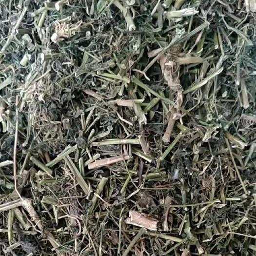 廣西壯族自治區玉林市玉州區 龍葵  一斤起發貨