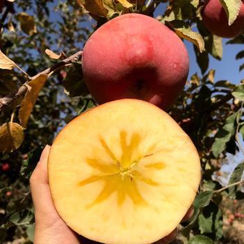 阿克蘇冰糖心蘋果正宗阿克蘇紅旗坡冰糖心蘋果一箱毛重10斤