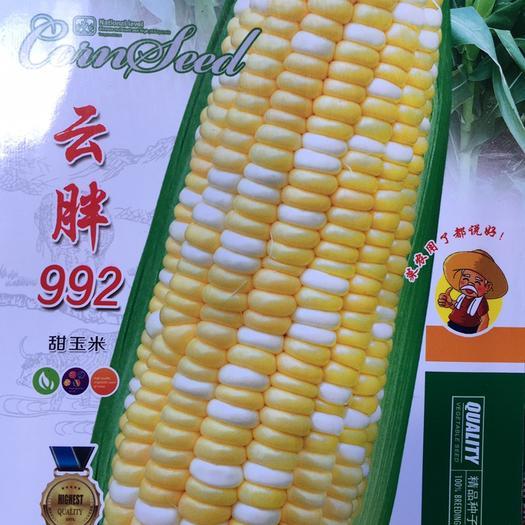 云南省昆明市官渡区玉米种子 甜脆玉米种,花超包谷,冷库基地专供