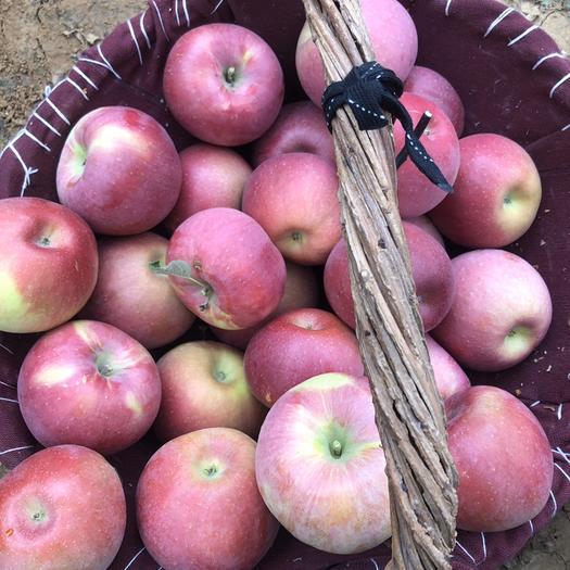內蒙古自治區赤峰市寧城縣 內蒙特產寧城特產蒙富蘋果