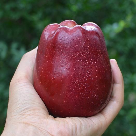 重慶市大渡口區天水花牛蘋果  10斤大果花牛果  天水花牛鮮果