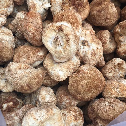 福建省寧德市古田縣 仿野生10以上猴頭菇,25包郵,需要的老板來,無添加純天然