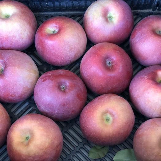 內蒙古自治區赤峰市寧城縣 內蒙寧城,靠近東北,溫差大,日照充足,果農,家中3萬斤蘋果