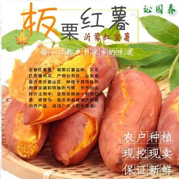 板栗紅薯 沂蒙紅蜜薯 農戶種植現挖現賣 紅皮黃心 香甜軟糯