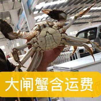 湖北大閘蟹螃蟹1.8-3.5母蟹,公蟹2.0-4.5兩