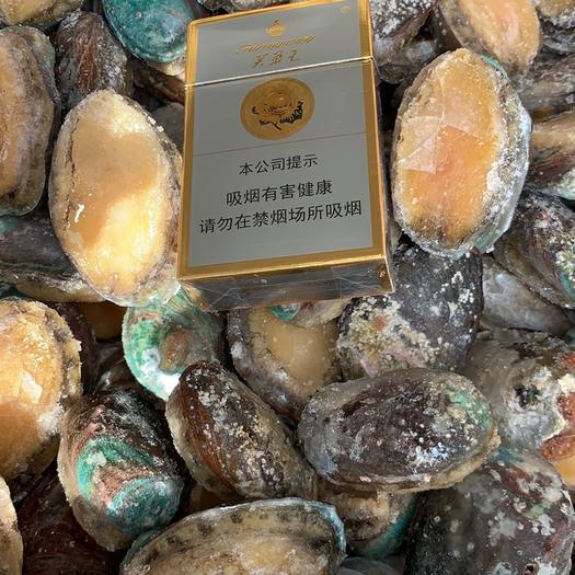 福建省漳州市诏安县九孔鲍 人工养殖
