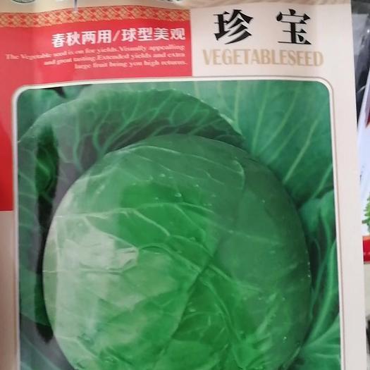 河南省商丘市梁园区绿甘蓝种子 甘蓝种子