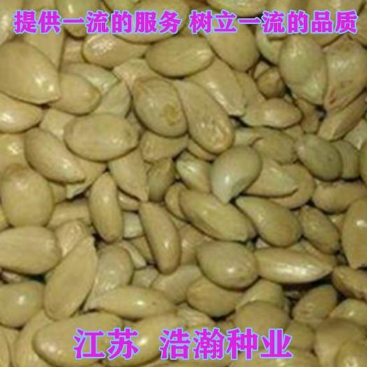 江苏省宿迁市沭阳县 枳壳种子枳壳枸橘香櫞香橙蜜柚种子包邮