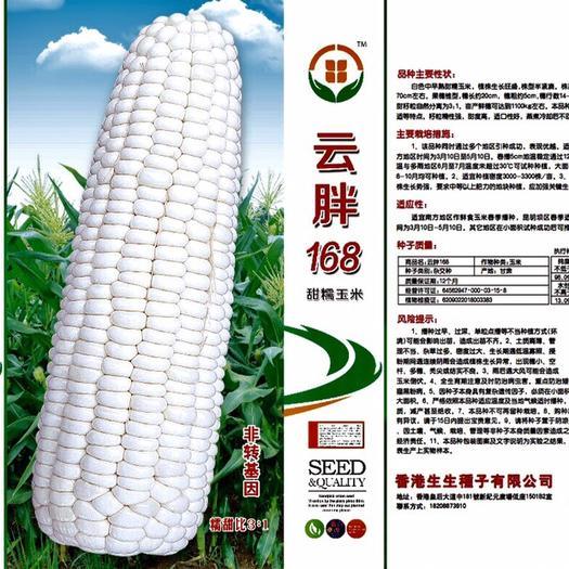 云南省昆明市嵩明县糯玉米种子 白色甜糯 中早熟 高产 口感佳