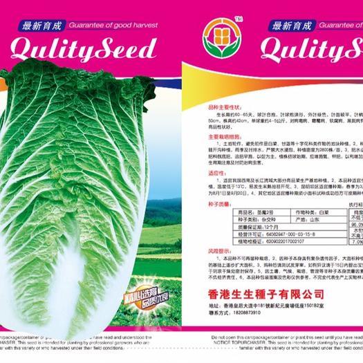 云南省昆明市嵩明县大白菜种子 抗病能力强 菜型美观 商品性佳