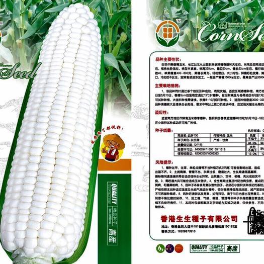 云南省昆明市嵩明县糯玉米种子 中熟 广适性 口感佳
