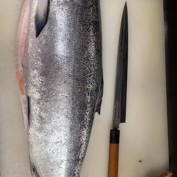 大西洋鮭魚