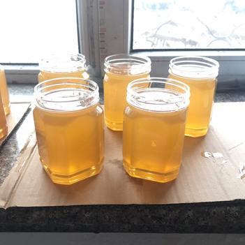 東北黑蜂椴樹蜜原蜜41.2度純天然無添加自家養蜂