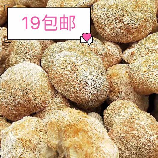 福建省寧德市蕉城區 包郵一斤18元古田猴頭菇干貨特產本月新貨個頭大短毛