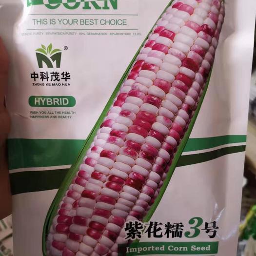 河南省鄭州市二七區 玉米種子