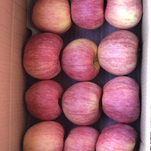 辽宁省葫芦岛市绥中县 优质寒富苹果主产区、一手货源、直供批发商
