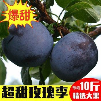 【特价包邮】新鲜现摘黑玫瑰冰糖李李子水果应季水果黑布林批发