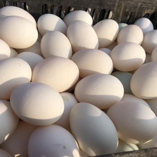 河北省保定市安新縣松花皮蛋 出售水洗蛋.松花蛋.桶裝大鵝蛋