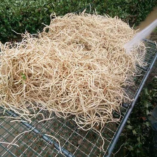 廣西壯族自治區柳州市鹿寨縣 大量魚腥草出售