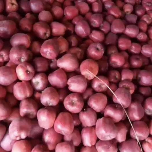 四川省成都市郫都区花牛苹果 65mm以上 表光 光果